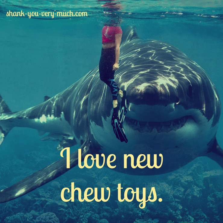 "I swimmer in the water with a giant shark looming right behind her showing it's teeth like a smile. The shark says ""I love new chew toys."""