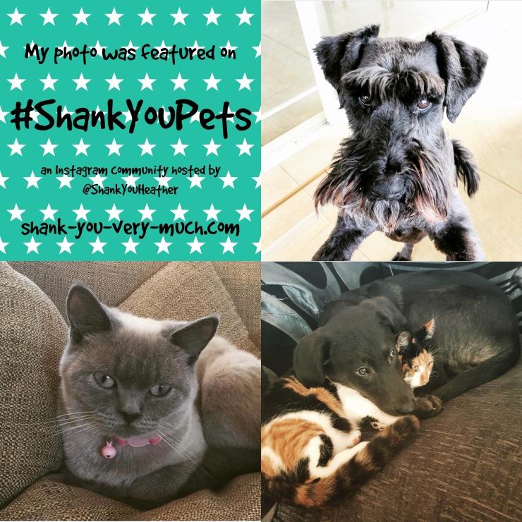 Shank You Pets week 4