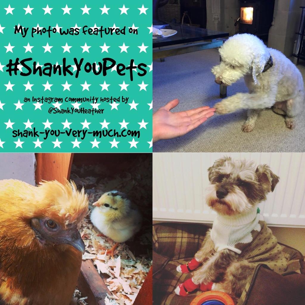 #ShankYouPets