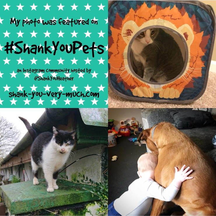 Shank You Pets week 5