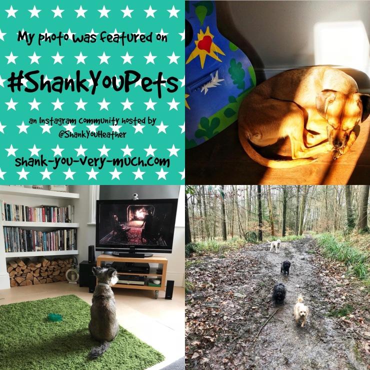 Shank You Pets week 5