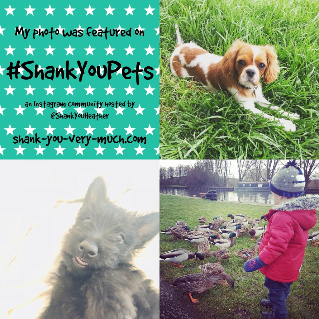 Shank You Pets week 7