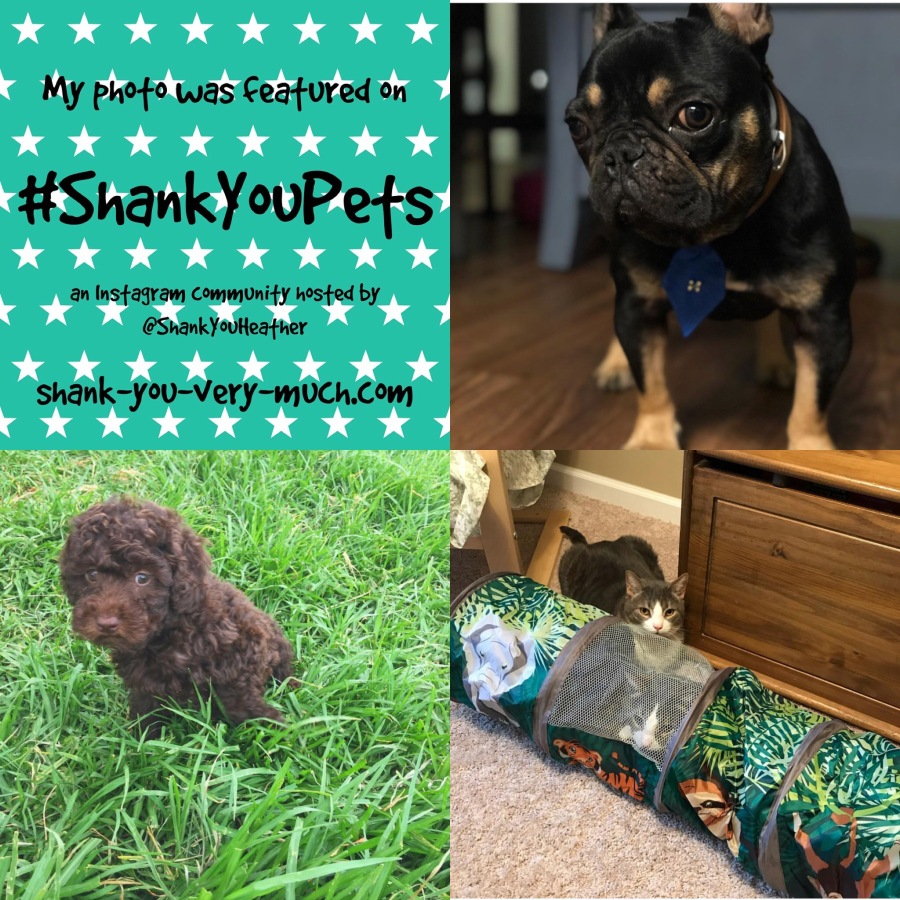 Shank You Pets week 8