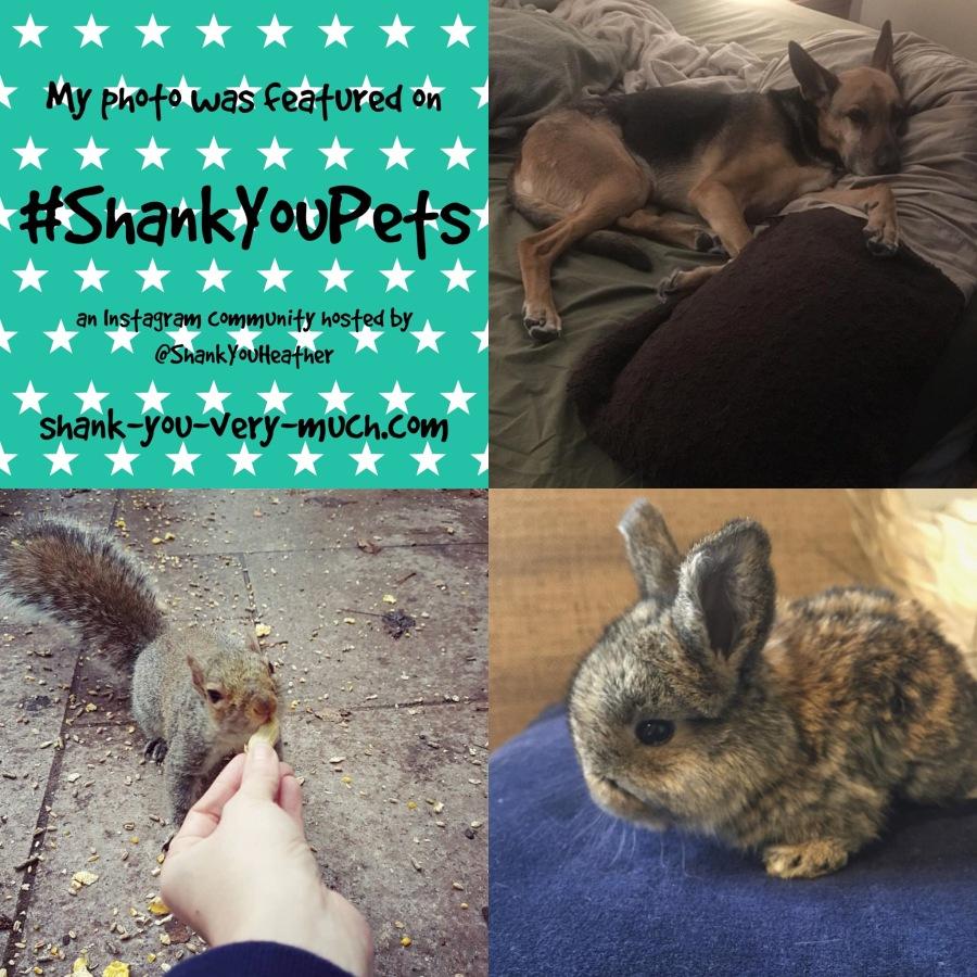 Shank You Pets week 12
