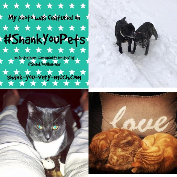 Shank You Pets week 10
