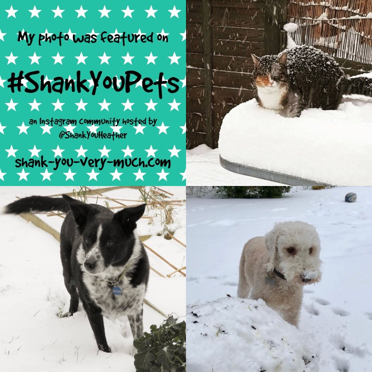 Three photos in one collage. A cat sitting in snow with snow on her back. A dog with black and white hair in the snow. A white dog with a snow covered nose.