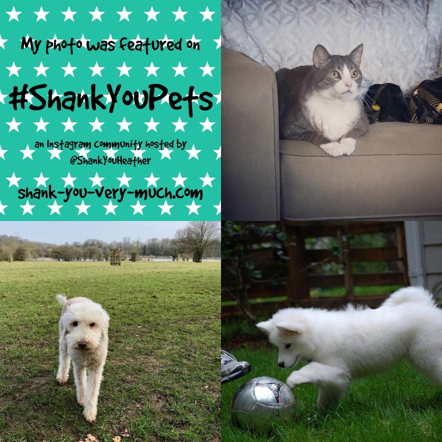 Shank You Pets week 13