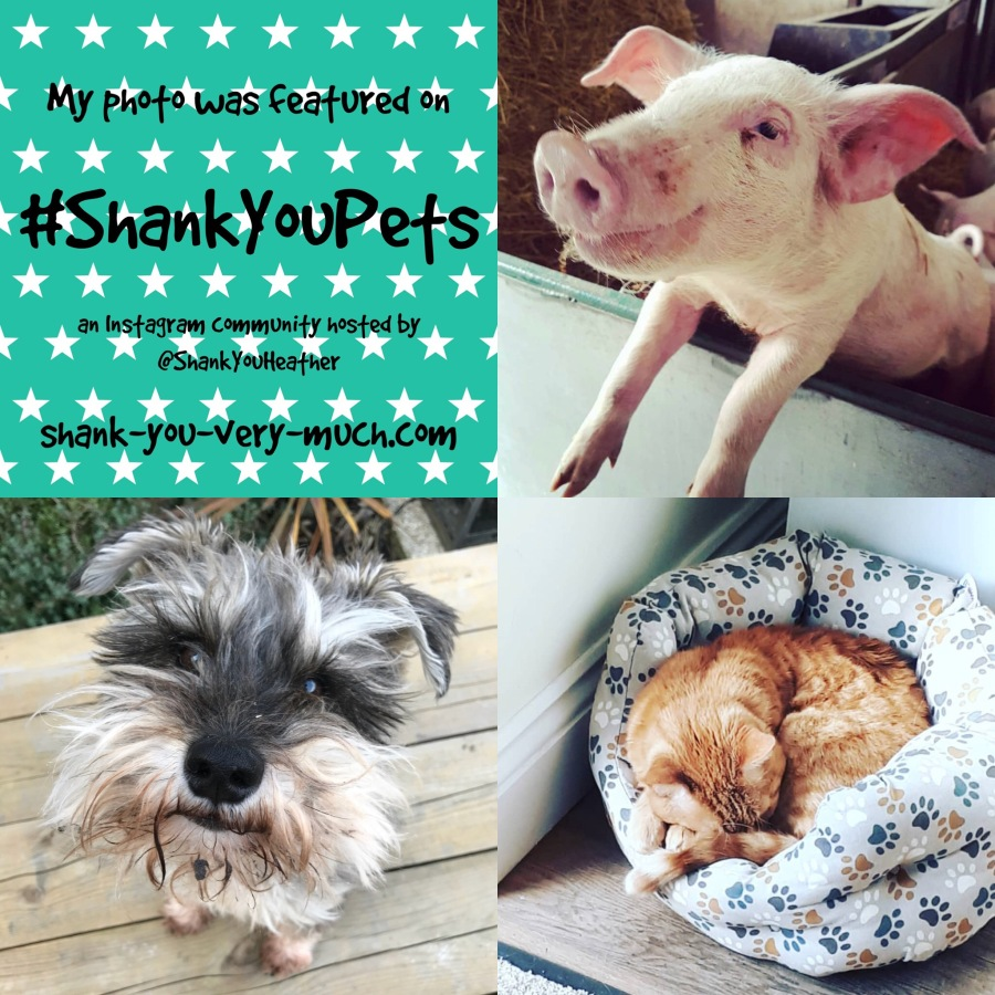 Shank You Pets week 17
