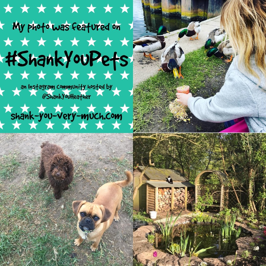 a photo collage showing a girl feeding ducks, 2 dogs looking into the camera, and a cat sitting on the roof of a garden shed