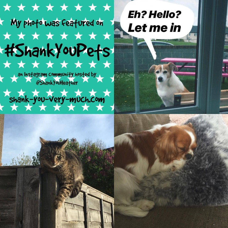 A picture collage featuring a dog looking into a window, a cat on a fence, and another dog taking a nap