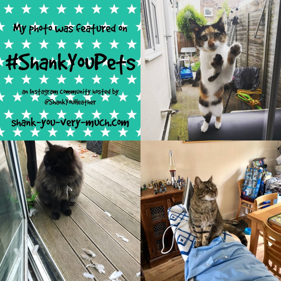 Shank You Pets week 24