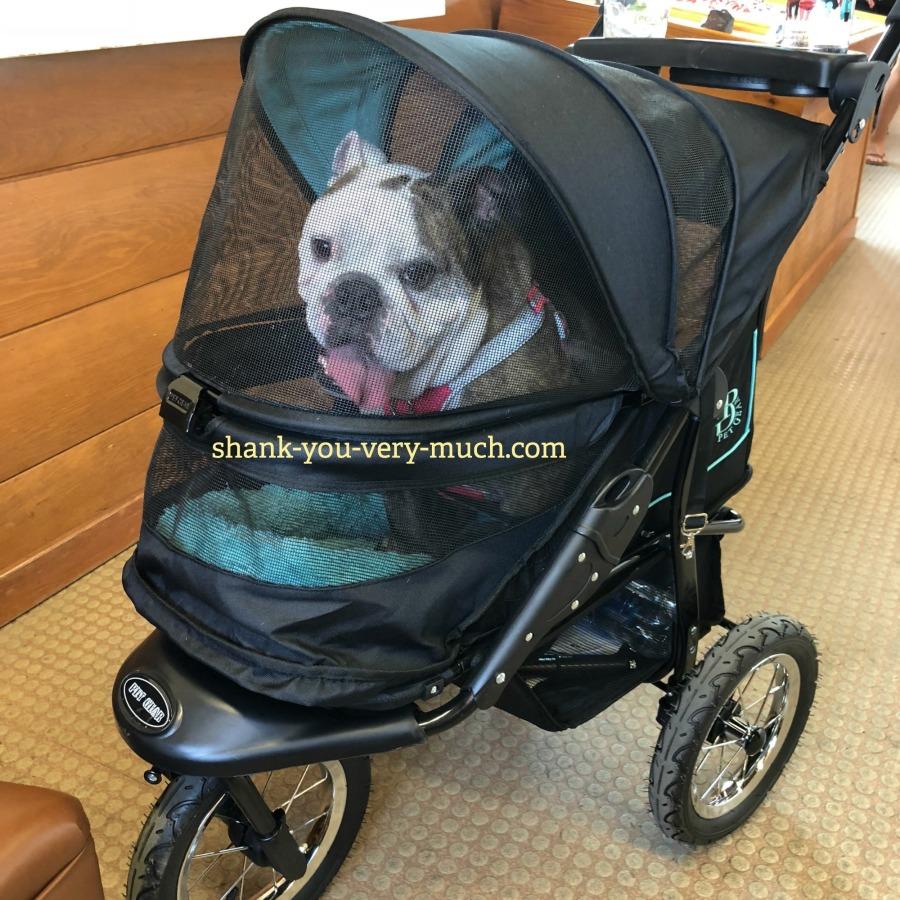 Lola sitting in her stroller