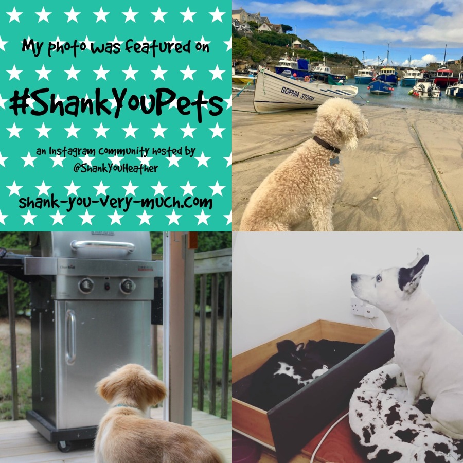a photo collage showing a dog with some boats, a dog looking at a bbq, and a dog with a box of kittens.