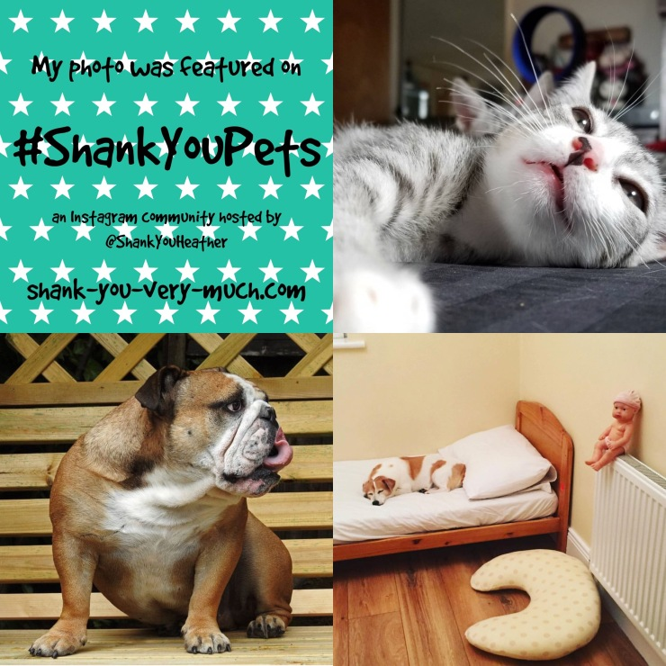 A photo collage showing a cat, a bulldog, and a small dog lying in a bed