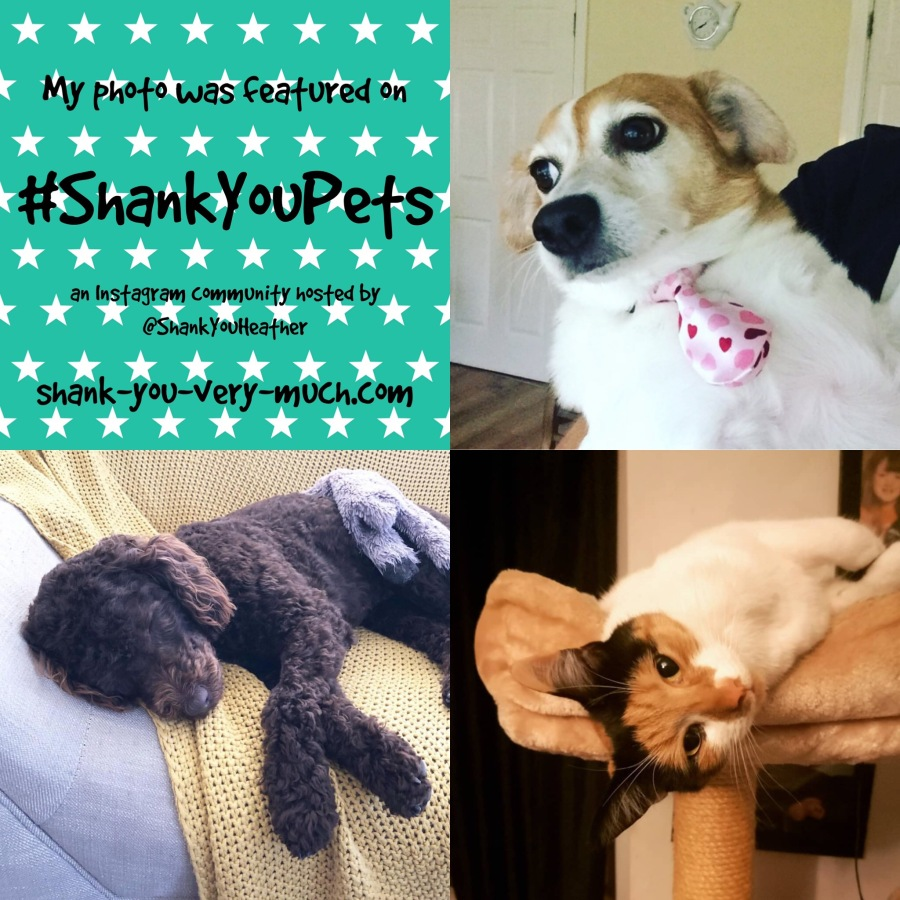 A text collage showing a sleeping dog, a cat napping, and another dog wearing a tie.