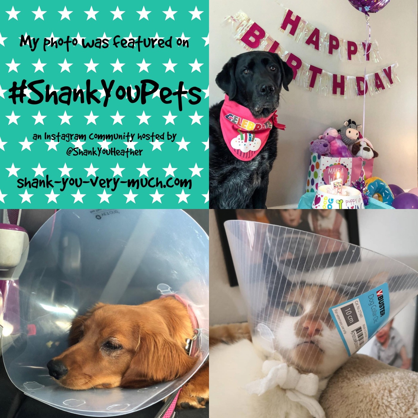 A photo collage showing a dog at her birthday party and another dog and cat wearing a plastic cone on their heads.