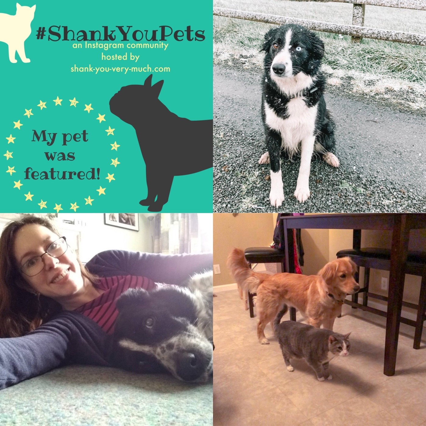 A collage of dog and cat photos