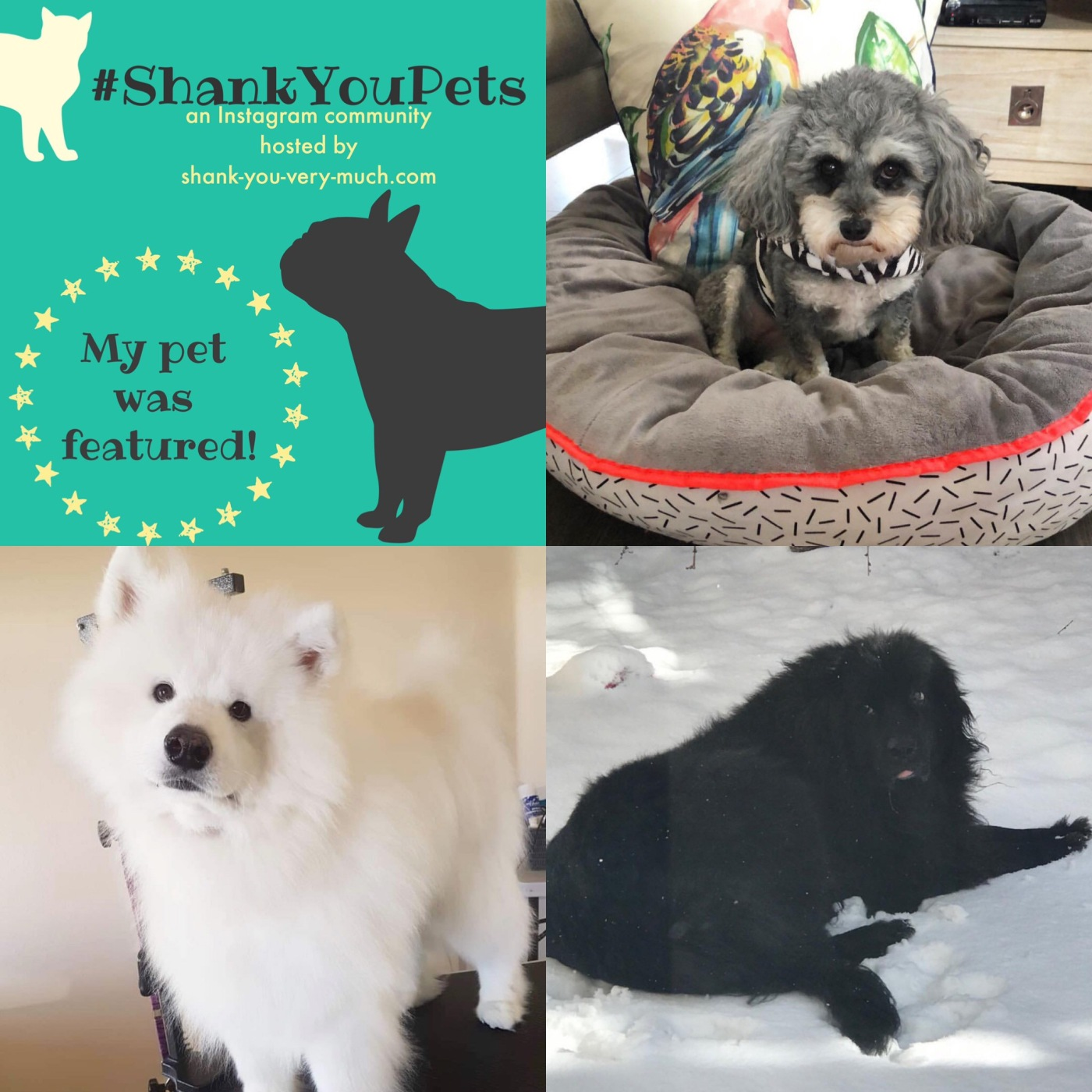 A collage of dogs enjoying the winter!