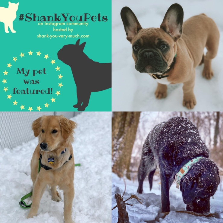 A collage of three dogs enjoying the snow