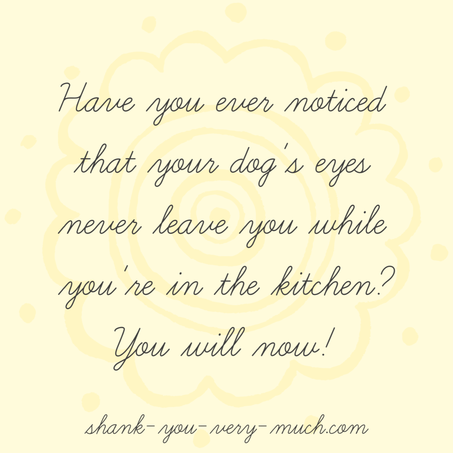 'Have you ever noticed that your dog's eyes never leave you while you're in the kitchen? You will now!'