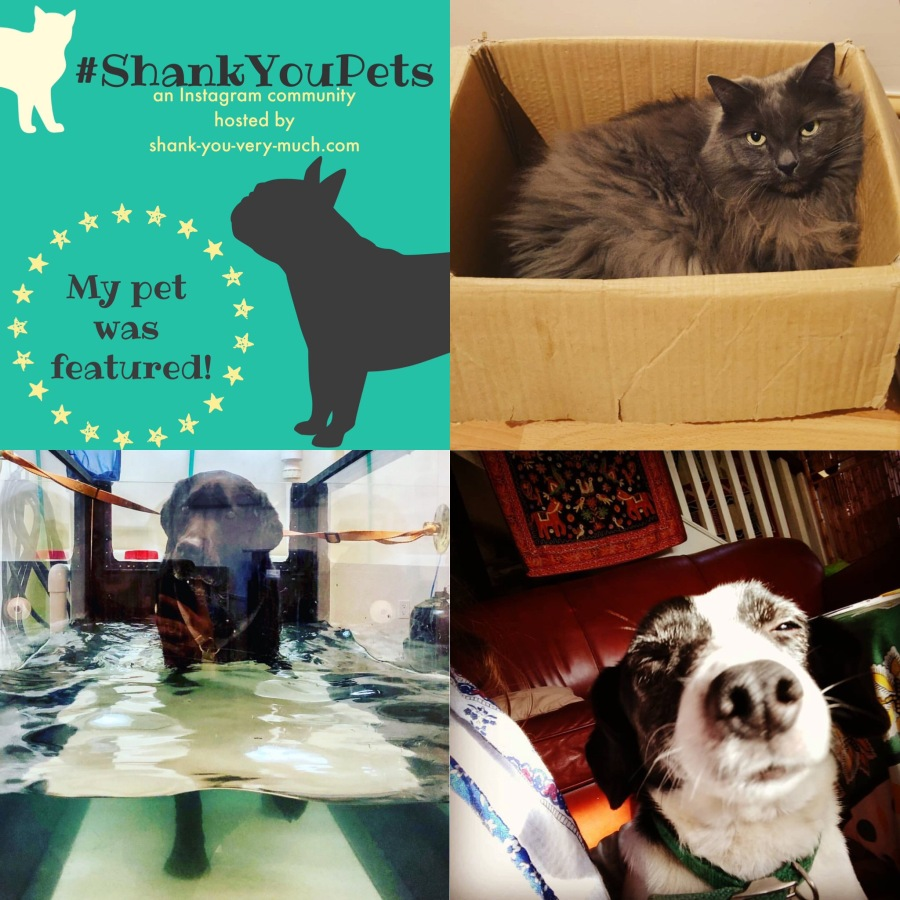 A collage of cats and dogs.