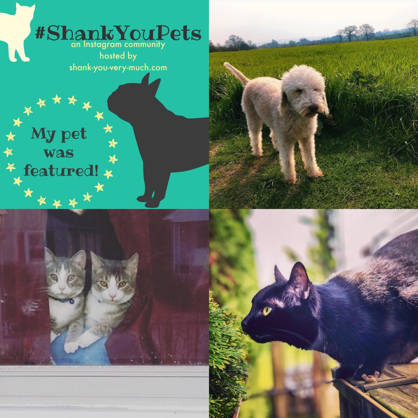 A collage of a dog in a grassy field, two cats peeping out a window, and a black cat ready to pounce.