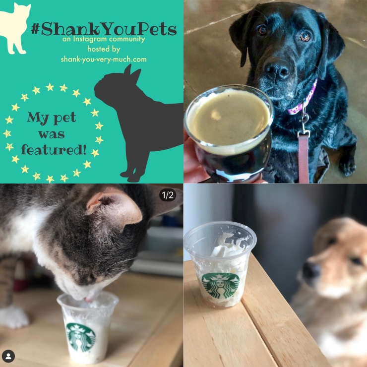 A collage of pets with treats