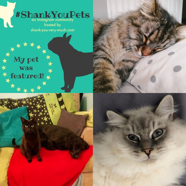 A collage of cats doing things that cats do - sleeping, annoying a dog, and looking cute.