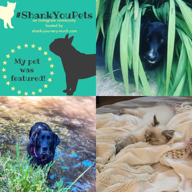 A collage of pets - one dog is hiding in a bush, another dog is playing in a river, and a cat is napping on a bed.