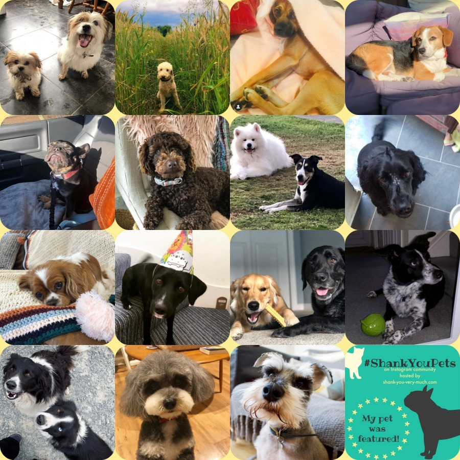A collage of dogs to celebrate National Dog Day.